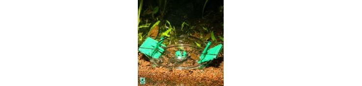 Piège à escargots