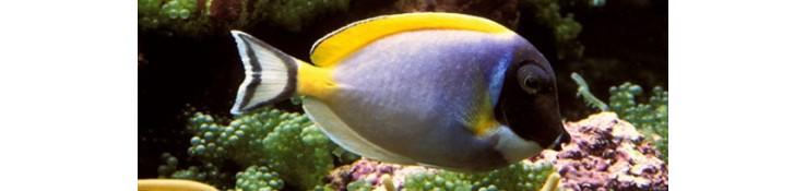 Maladie poissons