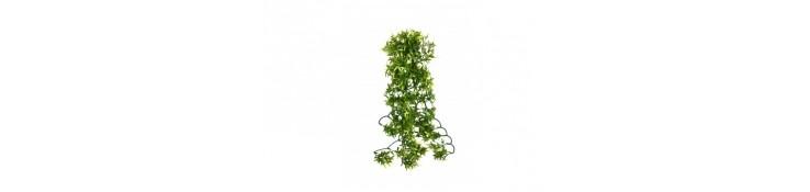 Décoration résine, plantes, écuelles ...
