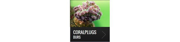 Coralplugs durs